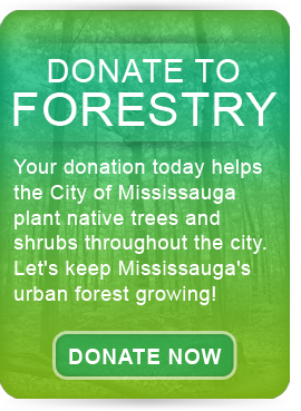 Donate to Forestry