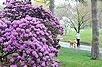 Rhododendron Gardens